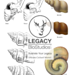 Snail Morphology