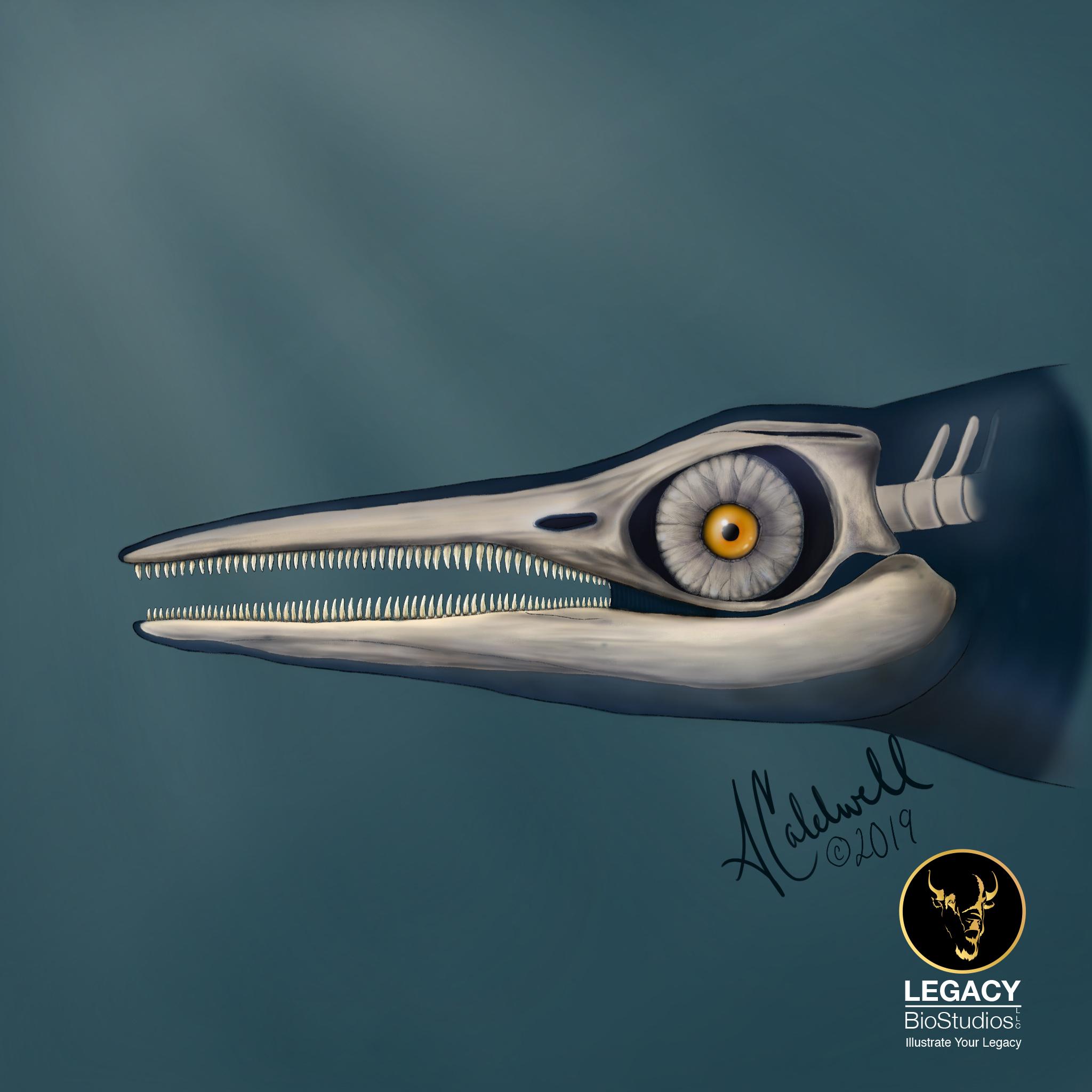 Ichthyosaur by Assata Caldwell Worrell